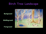 Birch Tree Tape Landscapes