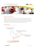Activo Poultry