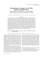 Morphologic changes in the TMJ following splint wear.