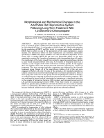 Morphological and biochemical changes in the adult male rat reproductive system following long-term treatment with 1 2-dibromo-3-chloropropane.