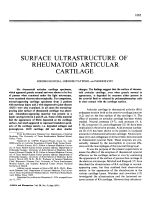 Surface Ultrastructure of Rheumatoid Articular Cartilage.