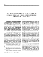 The altered biomechanical state of human femoral head osteoarthritic articular cartilage.