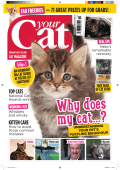 Your Cat October 2017