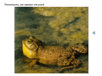Frogs, toads (rus) with sounds