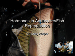 Hormones in Aquacultre/Fish Reproduction