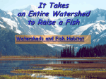 Watersheds and Fish Habitat