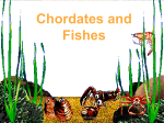 Chordates and Fishes