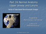 Part 2A - Normal Anatomy Upper Airway and Larynx