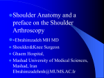 Anatomy of the shoulder and its arthroscopic considerations
