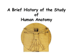 PPT A Brief History of the Study of Human Anatomy
