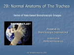 Part 2B - Normal Anatomy of the Trachea
