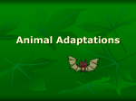 Animal Adaptations Types of Adaptation