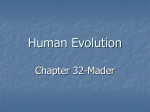 Human Evolution Class Notes