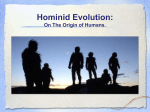 Hominid Evolution - Edgartown School