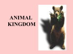 Animal Kingdom PPT