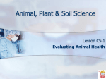 Evaluating Animal Health