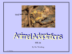 Animal Adaptations ppt