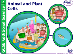 1. Animal and Plant Cells
