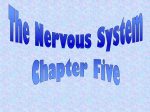 The Nervous System - Deafed.net Homepage
