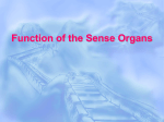 Functions of the sense organs