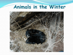 Animals in the Winter Second Grade