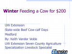 Winter Feeding a Cow for $100