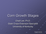 Corn Growth Stages (11226 kb)
