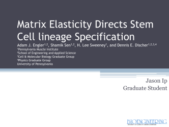 Matrix Elasticity Directs Stem Cell lineage Specification Adam J