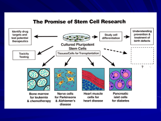 Discovery: Stem Cell Biology NIH Actions