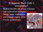 Embryonic Stem Cells = Immortality?