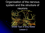 Organisation of the nervous system and the structure of neurones