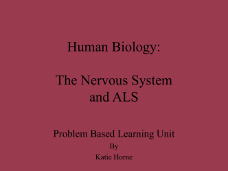 Human Biology: The Nervous System