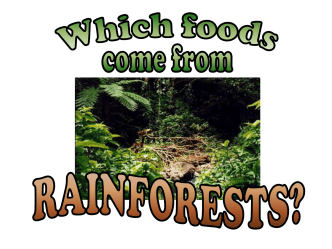 rainforest_foods - Primary Resources