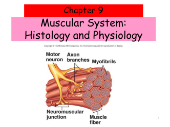 3_Ch_9_Muscle_Notes