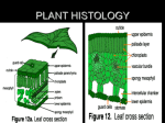 PLANT HISTOLOGY - Free Courseware at UWC