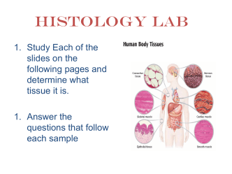 histology lab quiz - Falconer Central School
