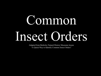 Common Insect Orders (ppt)
