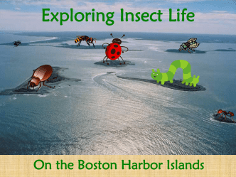 Boston Harbor Islands ATBI Insect Presentation