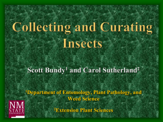 Insect Collection and Curation