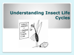 Understanding Insect Life Cycles