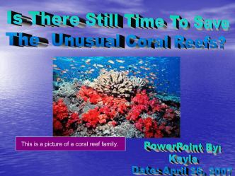 Is There Still Time To save this amazing animal: Coral