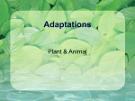 Adaptations - Science
