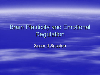 Brain Plasticity and Emotional Regulation