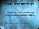 Image Pattern Recognition