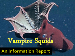 Download File - Vampire Squid