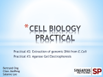 CELL BIOLOGY PRACTICAL