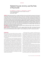 Skeletal muscle activity and the fate of myonuclei.