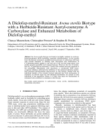 A Diclofop-methyl-Resistant              Avena sterilis              Biotype with a Herbicide-Resistant Acetyl-coenzyme A Carboxylase and Enhanced Metabolism of Diclofop-methyl