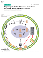 Amyloidogenic ProteinЦMembrane Interactions  Mechanistic Insight from Model Systems.