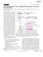 An Activatable siRNA Probe  Trigger-RNA-Dependent Activation of RNAi Function.